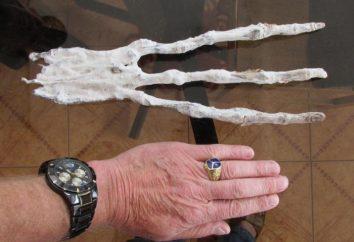 Mummia aliena in Perù? Ciò che davvero trovare scienziati