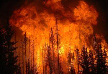 """classes de perigo de incêndio na floresta. A Ordem da Agência Florestal Federal do 05 de julho, N 287 2011 """"Com a aprovação da classificação de perigo de incêndio das florestas naturais"""""""