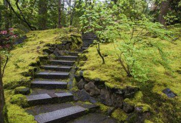 Les plantes répandent la famille Moss. Signification mousse dans la nature