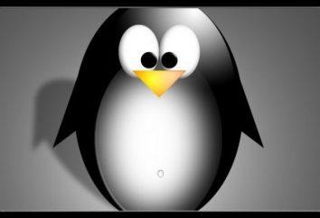 Jaka jest różnica między edytorami tekstowymi Linuxa