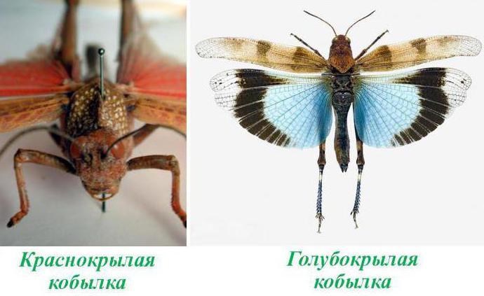 Niedlich Insekten Färbende Blätter Ideen - Beispielzusammenfassung ...
