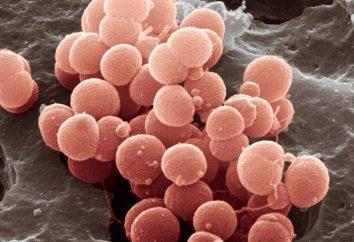 Die Impfung gegen Meningokokken-Erkrankung. Sind Impfungen notwendig?