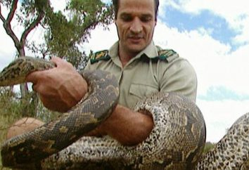 Nel sogno, di uccidere il serpente non significa combattere nella realtà