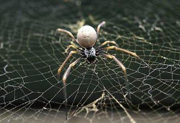 Que pouvons-nous attendre si le rêve d'une araignée?