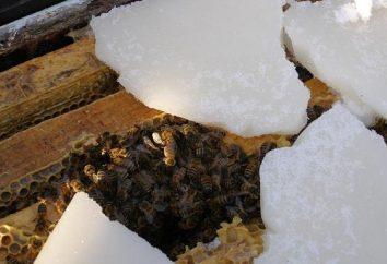 Hivernage abeilles dans la nature: la neige, sans isolation