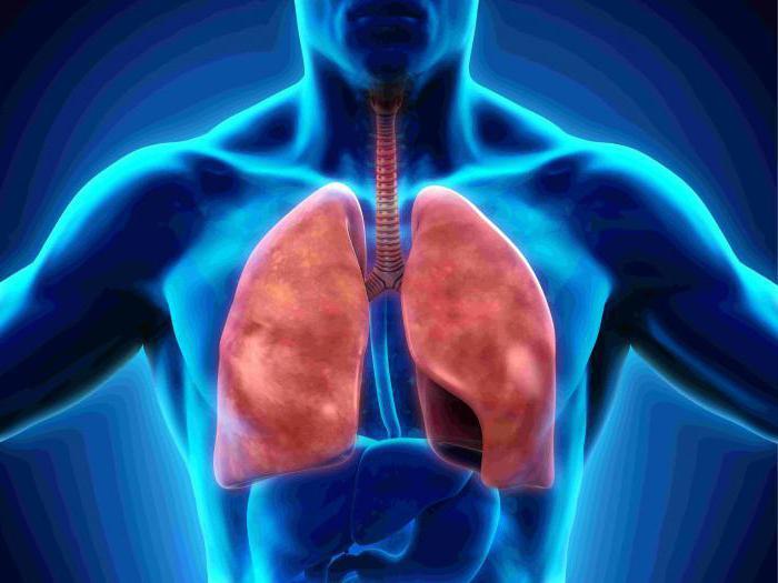 Atmungsorgane: die Struktur der Organe. Pleura - ist ... Licht ...