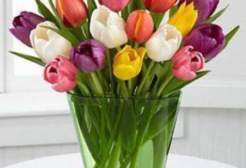 Ile jest cinch: interesujących faktów na temat kwiat