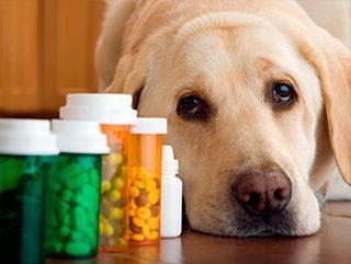 kliniki weterynaryjne Dniepropietrowsk: gdzie w leczeniu zwierzaka?