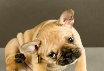 ¿Por qué el perro se sacude la cabeza y se rasca las orejas?