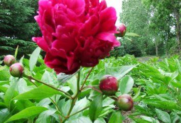W kraju baśni i mitów: nazwa pięknych kwiatów i legendy związane z nimi