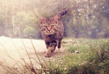 Sen książkę. Koty zobaczyć we śnie – na szczęście lub przeciwności?