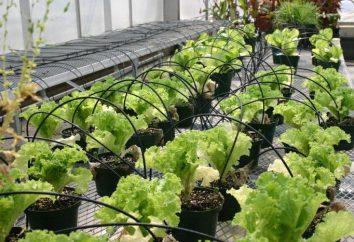systèmes d'irrigation goutte à goutte pour serres avec leurs propres mains