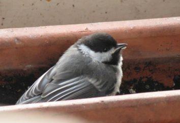 Sul balcone ha volato l'uccello. Un segno che è necessario interpretare correttamente