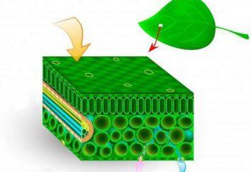 Jak rośliny oddychają? Praktyczne badanie problemu