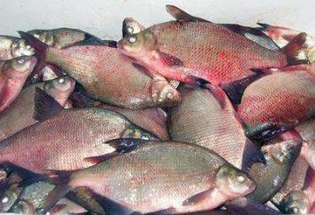 Przywr – na ryby? Przywr: objawy u ludzi, leczenia i profilaktyki
