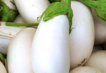 Bibo Bakłażan F1: opinie, zwłaszcza sadzenie i pielęgnacja. biały bakłażan