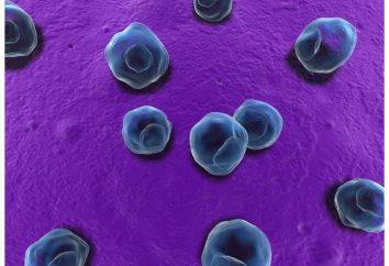 Przyczyny, objawy i leczenie schemat dla chlamydii u mężczyzn. Preparaty stosowane w leczeniu chlamydii