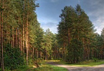 "Kostanay, ""pineta"" (spa): foto e recensioni di turisti"