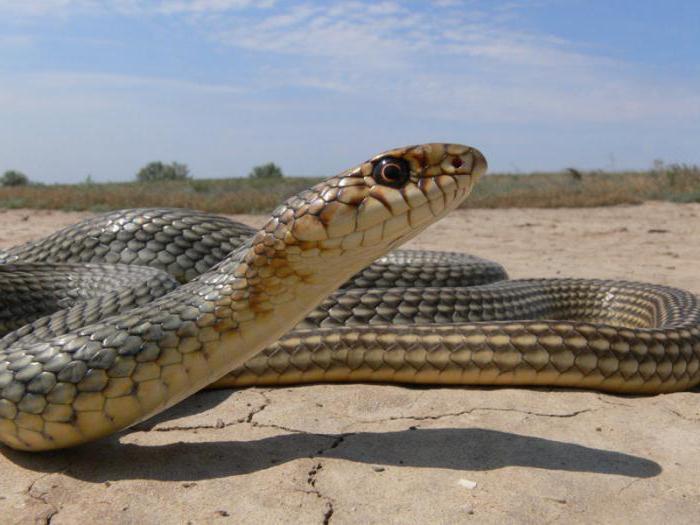 dove vivono i serpenti