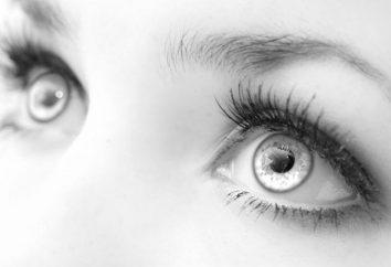 O incrível olho humano: a estrutura e as funções