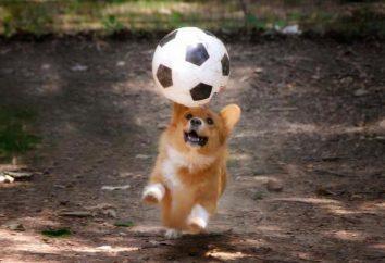 """""""Sic!"""" (Équipe de chien) – ce que cela signifie? Comment former votre chien la commande « Fetch! » et d'autres"""