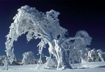Marzyć o śniegu – aby otrzymać wiadomość z rzeczywistością
