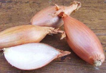 """Cipolla """"Bamberger"""": descrizione della varietà, recensioni, caratteristiche di coltivazione e raccolto i rendimenti"""