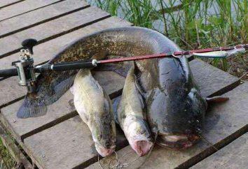 Polowanie i rybactwo w Czerepowca: Cechy, opisy i ciekawostki