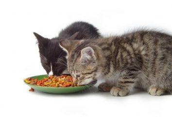 Ile razy dziennie karmić kota? Co karmić kota zwierzaka?