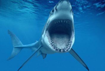 Il pesce più spaventosa del mondo. specie insolite. pesce spaventoso sul fondo dell'oceano