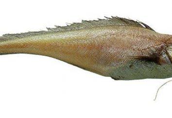 Lemonema (poisson): recettes de cuisine et propriétés utiles