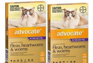 « Avocat » – gouttes pour les chats contre les puces: instruction, commentaires