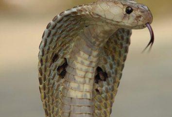 Cosa aspettarsi in un sogno ha visto un serpente?