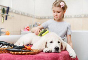 Furminators dla psów – co to jest? Furminators dla psów: fotografie, opinie, porady dotyczące wyboru