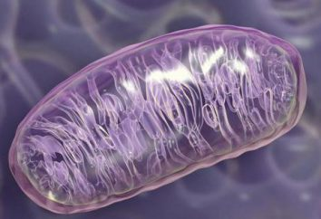 Organello – è … funzioni, la struttura degli organelli
