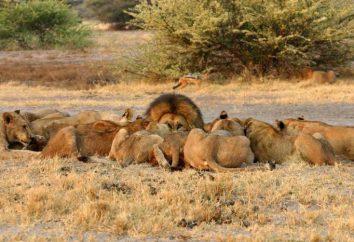 Riproduttiva isolamento – è il primo passo per l'evoluzione delle specie