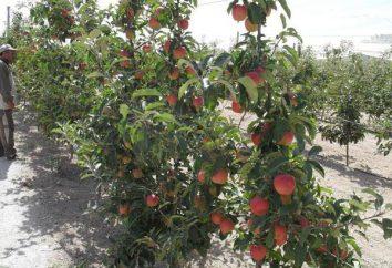 Garden Apple – ein Unternehmen oder ein Hobby?