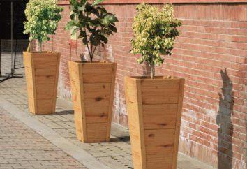 Drewniane donice, ich poglądy i rolę w dekoracji
