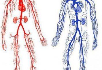saignements artériels: premiers soins, des règles de fourniture