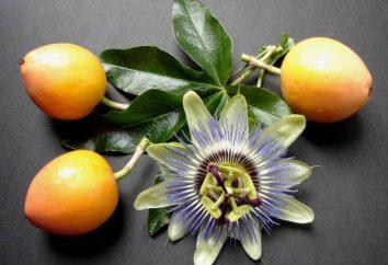 Magnifico passiflora – che cresce dal seme