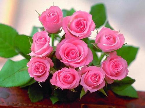 Traumdeutung: welche Träume Rosen?