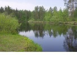 lac Mesherskoye – ce qui va arriver à l'étang à l'avenir?