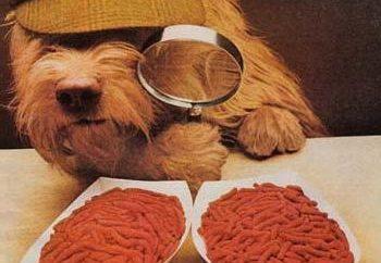Nutrición Yorkshire terrier: las normas y funciones