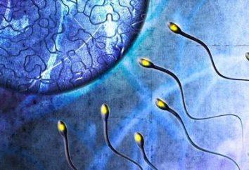 Die Auswirkungen von Alkohol auf den Keimzellen und Reproduktion