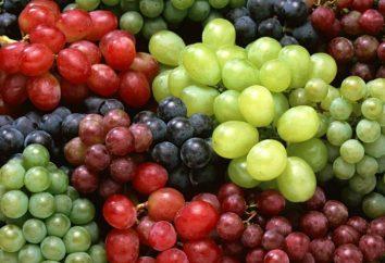 Raisins Jubilee Novotcherkassk – le meilleur parmi les variétés de la table