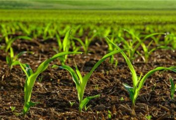 Le royaume des plantes: des exemples, des catégories systématiques de base et les caractéristiques de leur structure