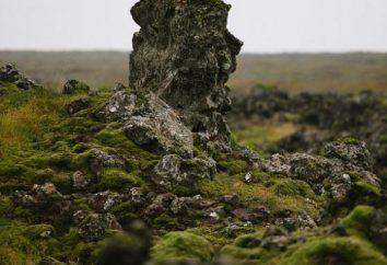 Mech islandzki warzenia kaszel? Korzystanie z mchu islandzkiego w medycynie ludowej