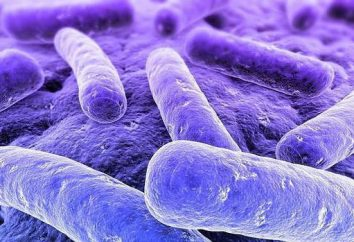 Klebsiella pneumoniae – co to jest? Bakteria Klebsiella pneumoniae: Opis