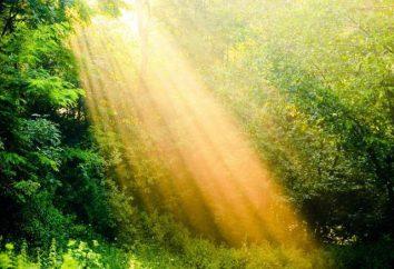 Radik: Nome valore, in particolare la natura e il destino