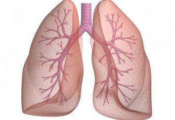 Lungenfunktion. Menschliche Lungen: Struktur, Funktion